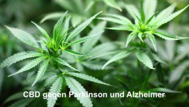 Photo of CBD gegen Parkinson und Alzheimer