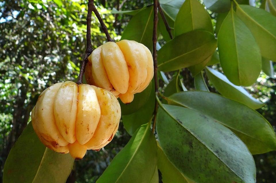 garcinia-cambogia-appetithemmer
